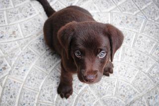 puppy-1082141_960_720.jpg